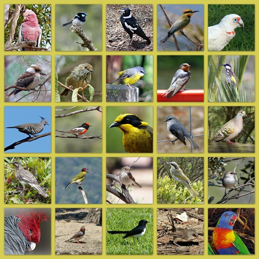Australian Birds - Lockdown by judithdeacon