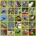 Australian Birds - Lockdown