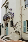 5th Apr 2020 - Wisteria in the Air