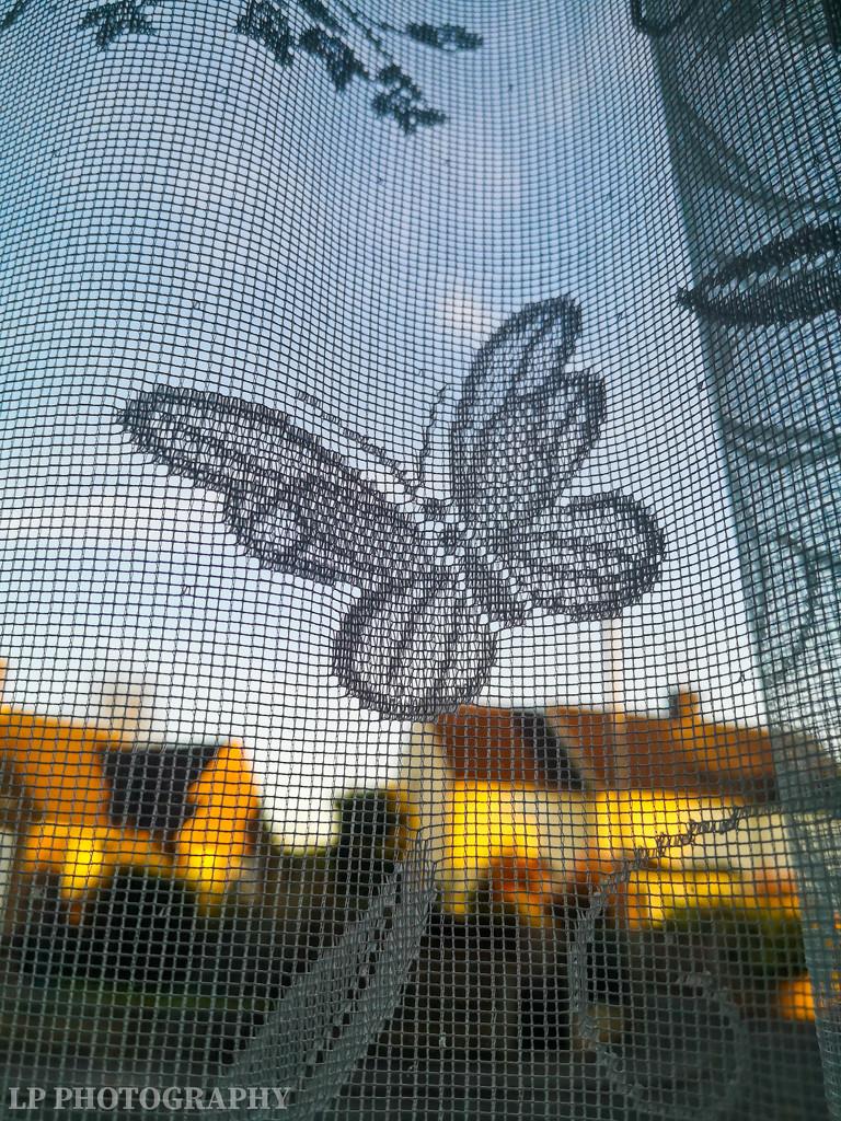 Flutterby Butterfly by tiredpanda