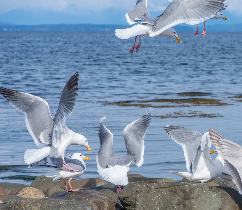 Flock of Seagulls by kwind