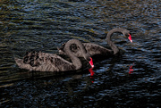 5th Apr 2020 - Black swans