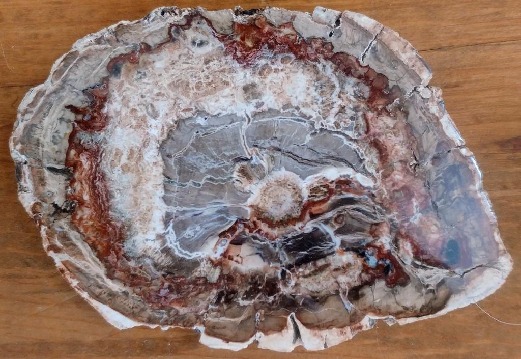 Petrified Wood by harbie