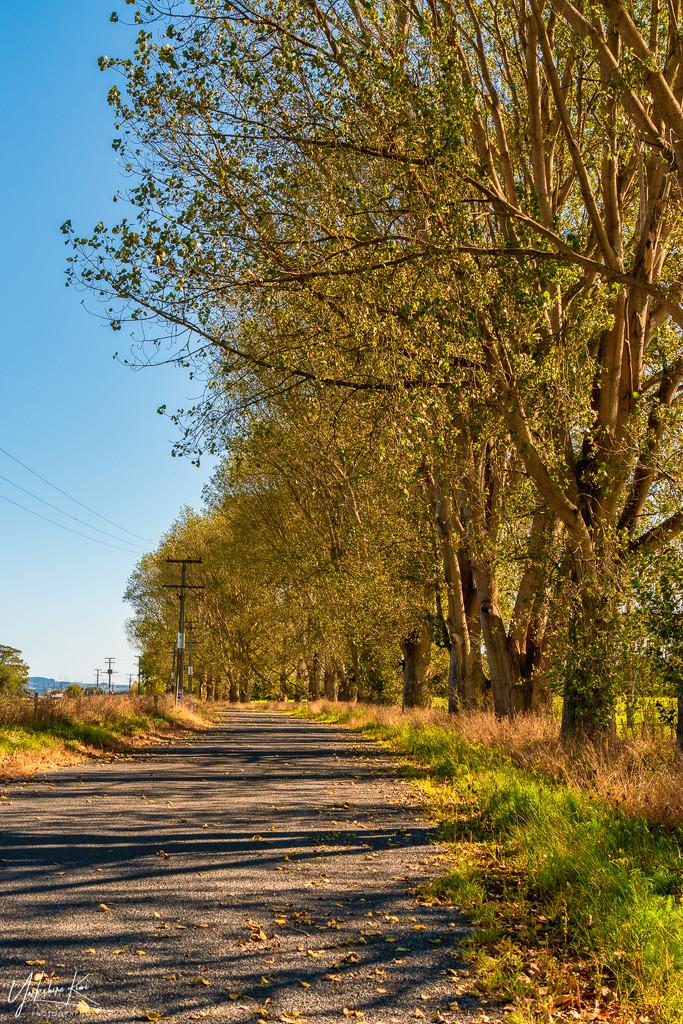 Autumn by yorkshirekiwi