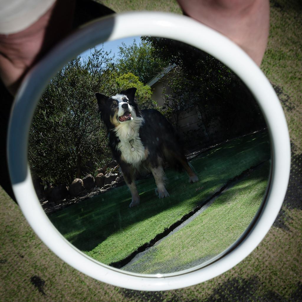 Mirror Image by salza