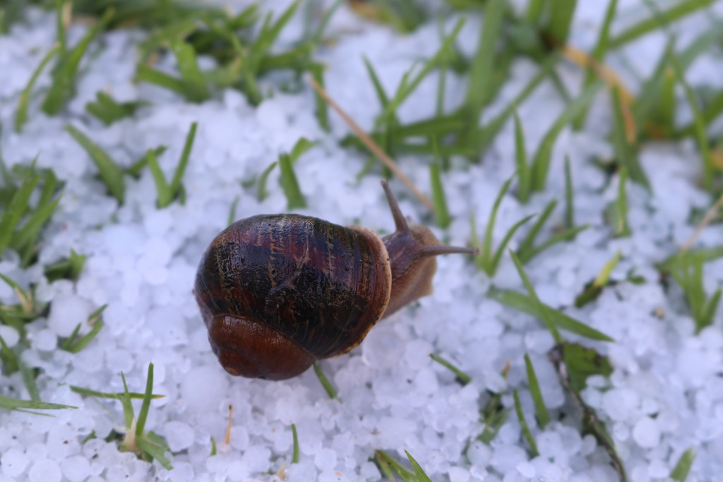 Hail snail by gilbertwood