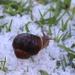 Hail snail