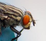 5th Apr 2020 - Fly