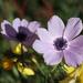 Anemones again