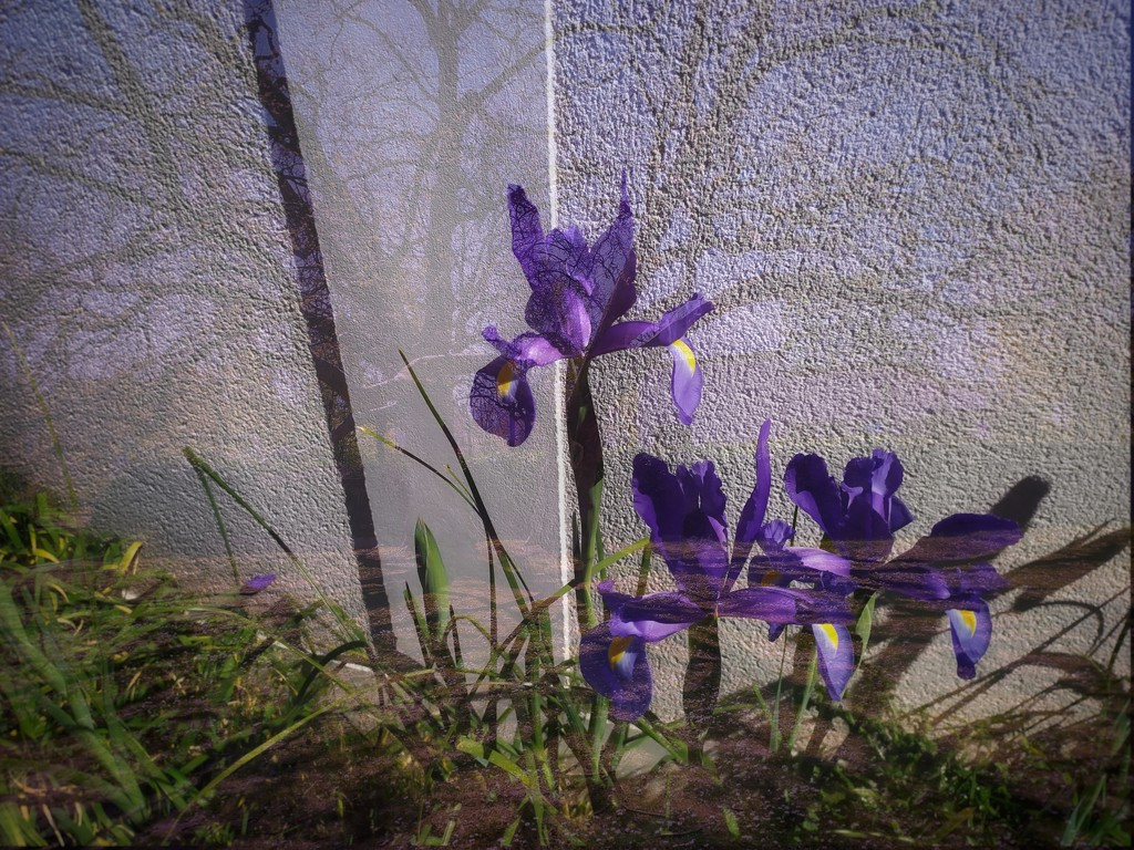 Iris overlap by dustyloup