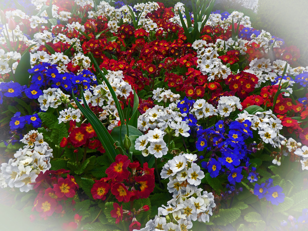 Spring Blooms by cmp