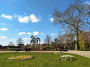 4th Apr 2020 - Springtime in the park
