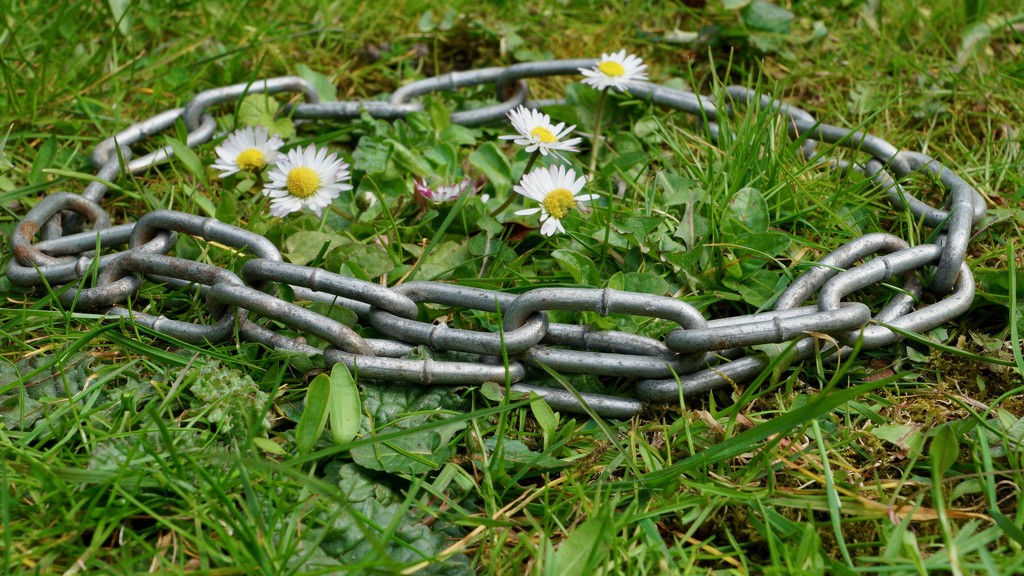 DAISY CHAIN OF EVENTS - DAY 5  by markp