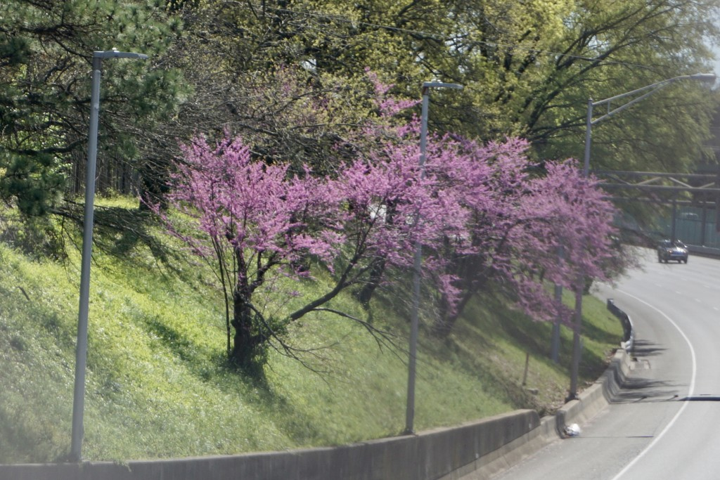 Spring Along the Highway by allie912