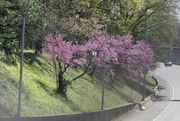 6th Apr 2020 - Spring Along the Highway