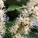 Startled blossom