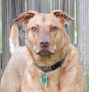 5th Apr 2020 - My guard dog