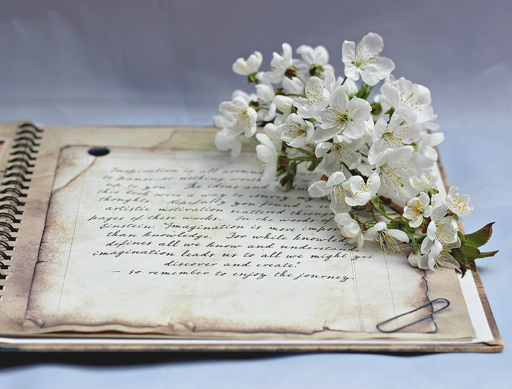 Blossom  Bookmark. by wendyfrost