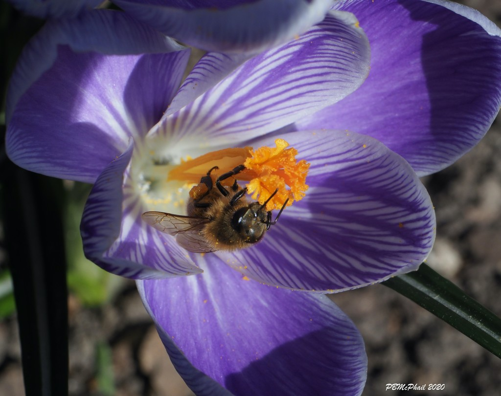 Busy Bee by selkie