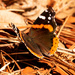 Butterfly on the Straw and Leaves!
