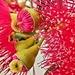 Gum flowers