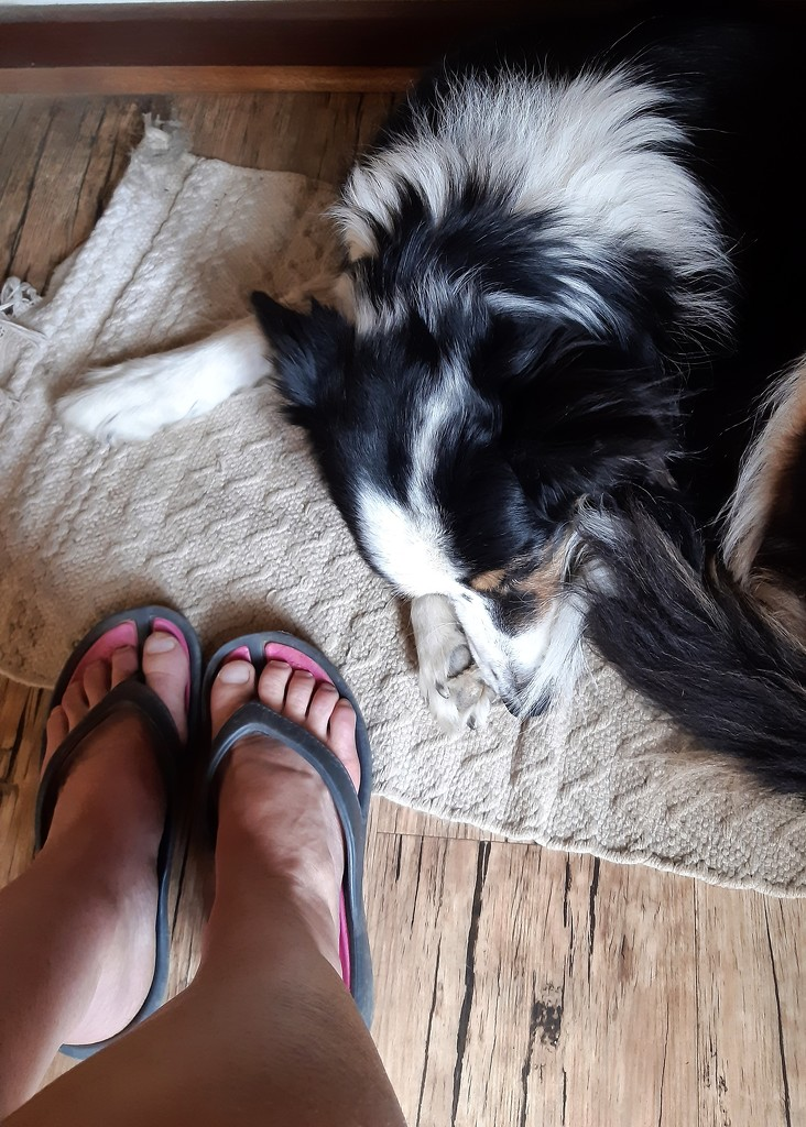 At my feet - Day 5 by salza