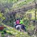 Horses trotting past