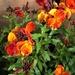 Welcome Wallflowers...