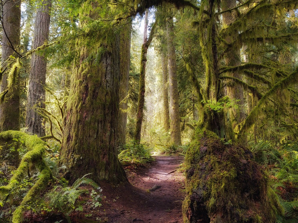 Ancient Forest, Oxbow Park, Gresham, Oregon by teiko