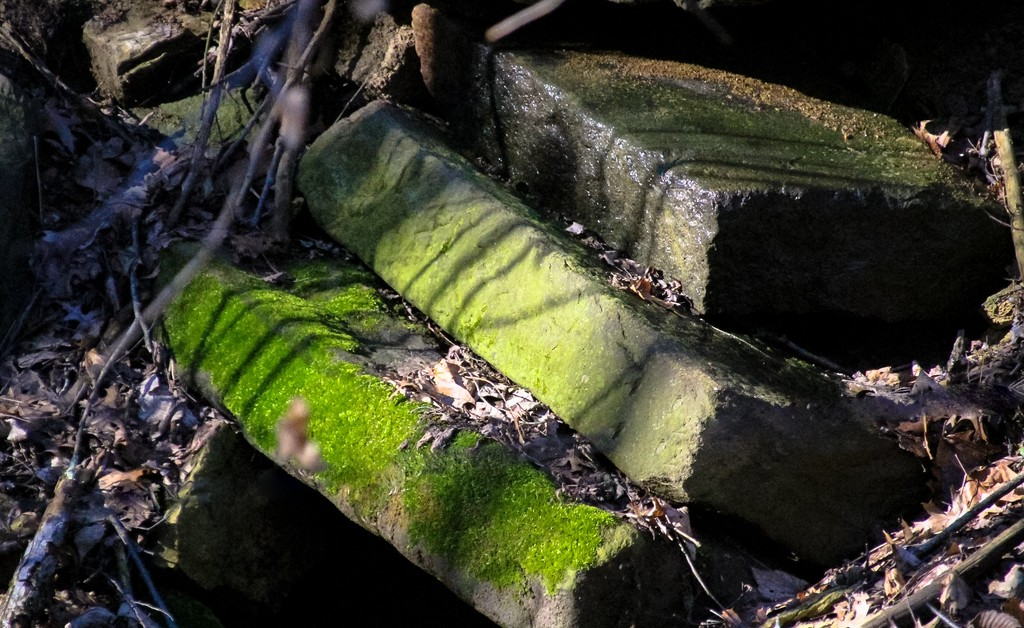 """""""...and moss grows fat on a rolling stone."""" by mittens"""