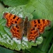 COMMA by markp