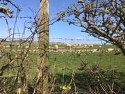 6th Apr 2020 - Peering through the hedge