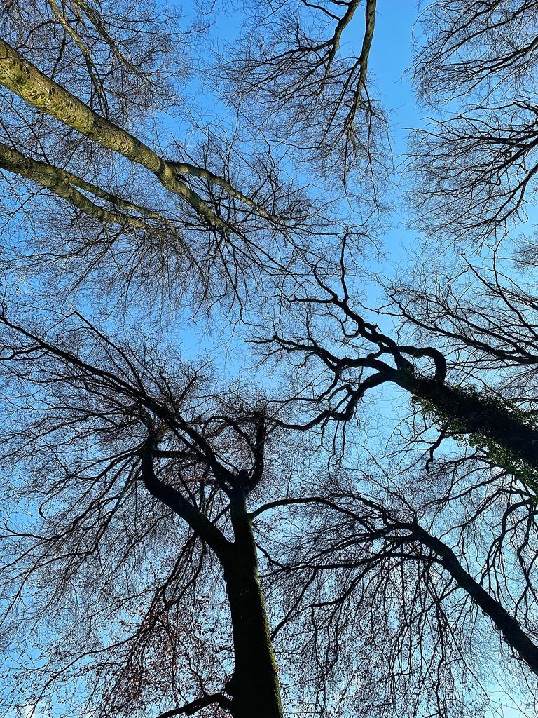 Trees.  by cocobella