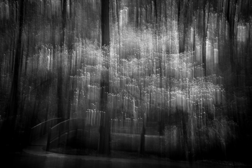 Dogwoods in Bloom ICM by darylo