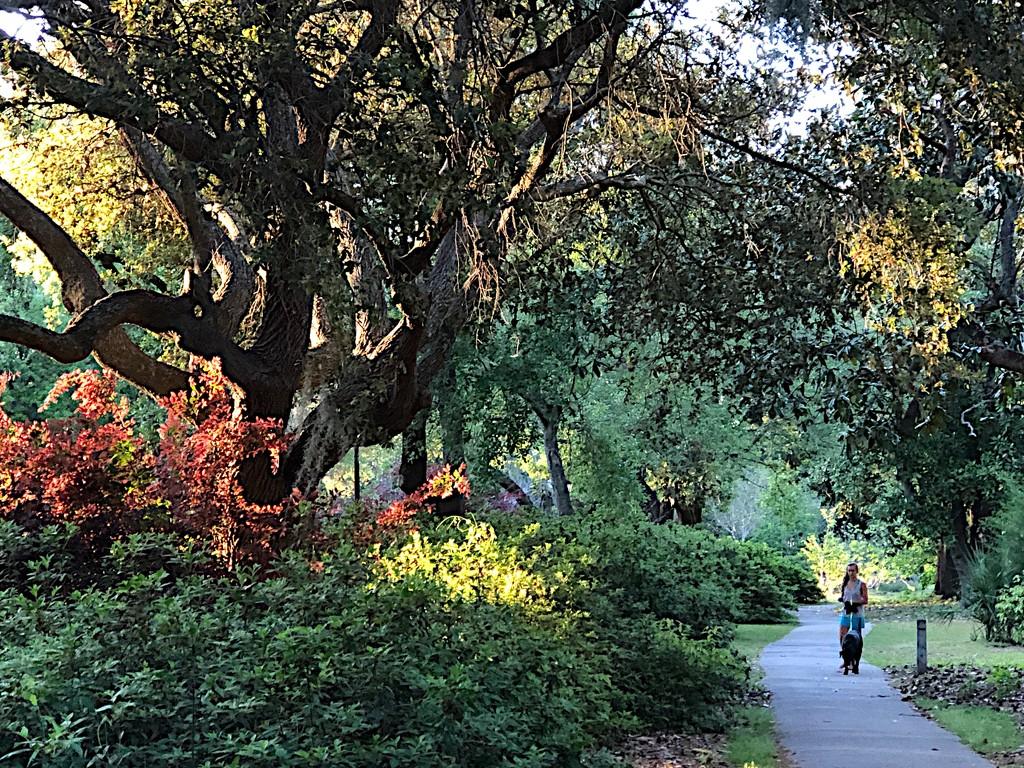 Spring afternoon walk at Hampton Park by congaree