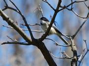 7th Apr 2020 - Backyard birding