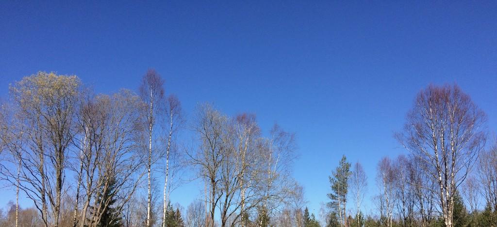Blue sky by huvesaker