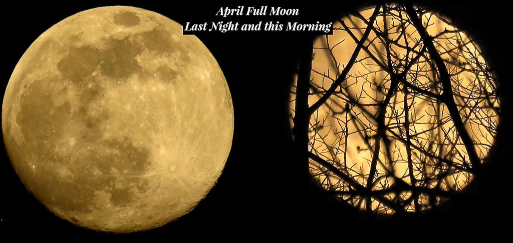 April Pink Full Moon  by radiogirl