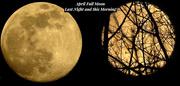 7th Apr 2020 - April Pink Full Moon