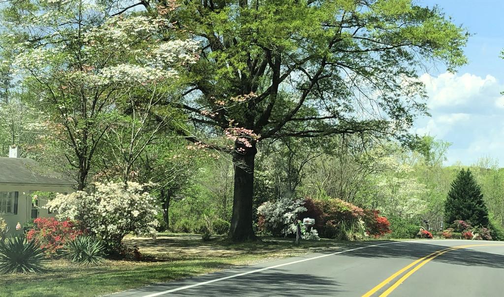 Spring Drive by homeschoolmom