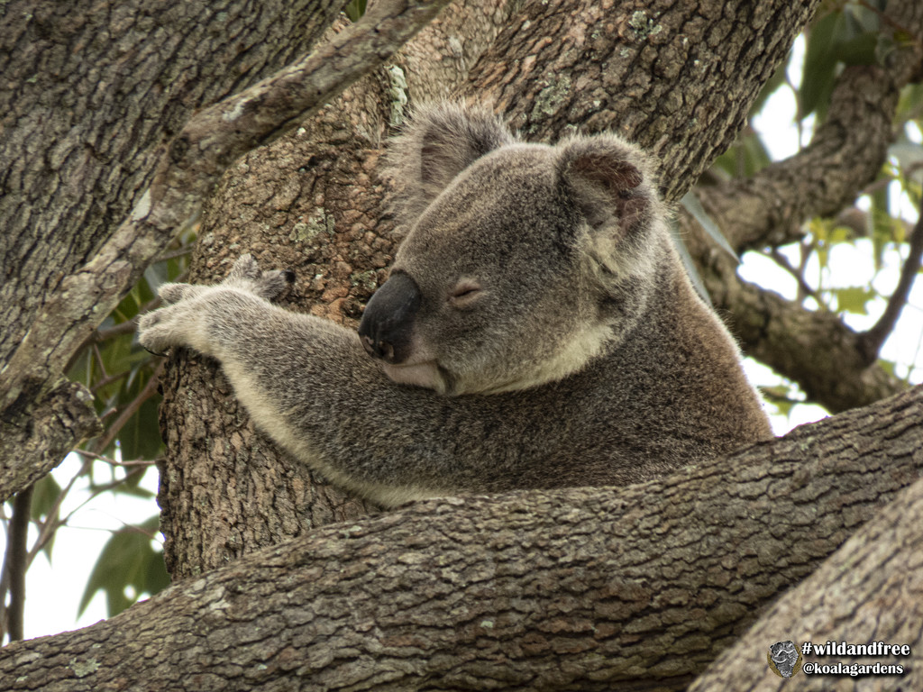 I'm just part of the tree by koalagardens