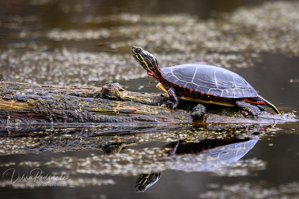 My backyard wildlife  by dridsdale
