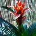 My new bromeliad
