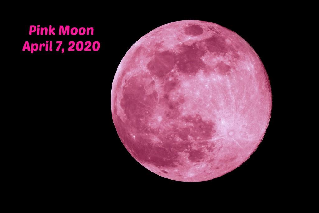 PINK Moon by homeschoolmom