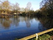 7th Apr 2020 - The Pond Vernon Park
