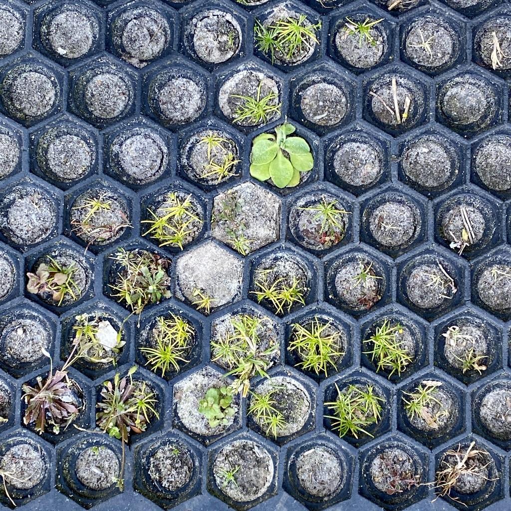 My pyramid greenery ;) by stimuloog