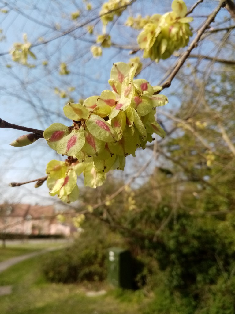 More Signs of Spring by g3xbm