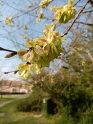 8th Apr 2020 - More Signs of Spring