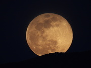 8th Apr 2020 - The Pink Moon