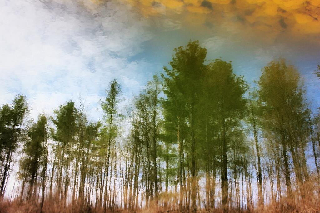 Looking Down to Look Up by juliedduncan